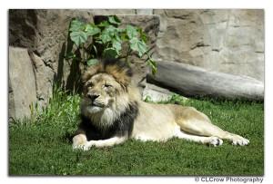 LION072016002